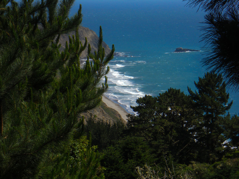 View of the coastline through the pines