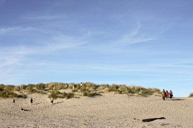 Limantour Beach dunes
