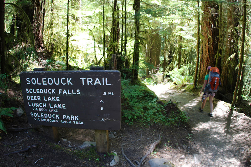 Passing Sol Duc or Soleduck Trail Junction