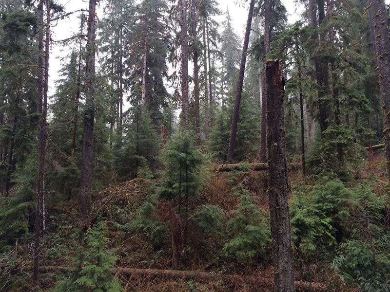 Gatton Creek Trail