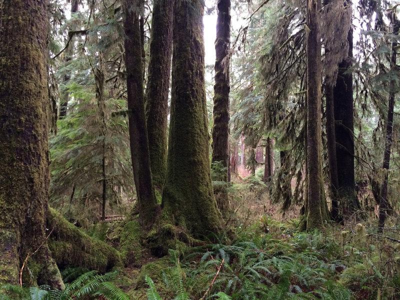 Gatton Creek Trail 23