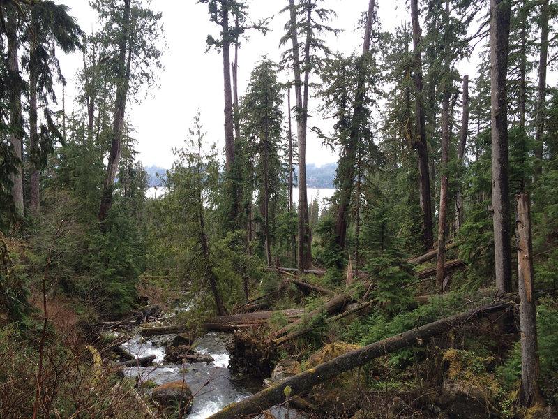 Gatton Creek Trail looking to the lake.