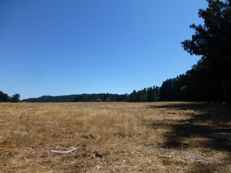 Horse pasture next to the Kule Loklo trail