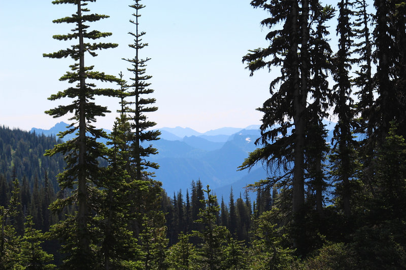 Whitebark Pine trees and cascades.