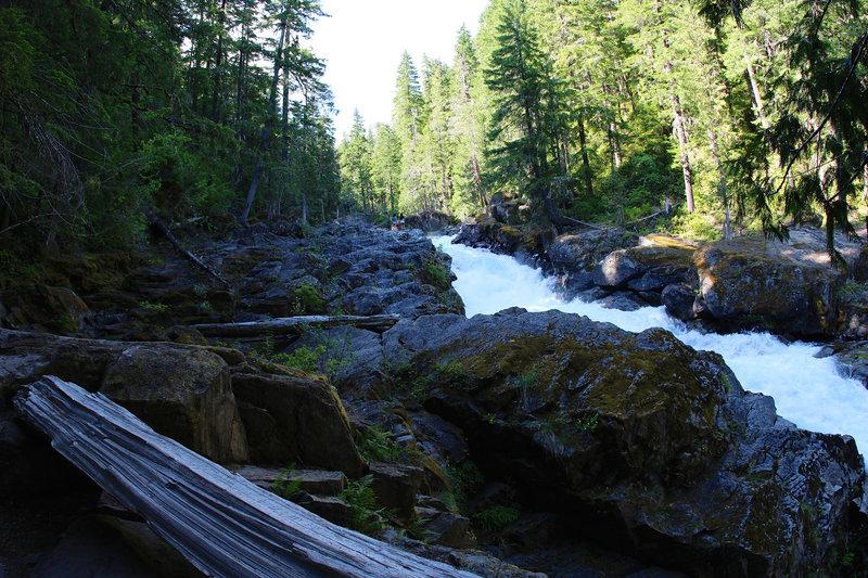 Ohanapecosh rapids