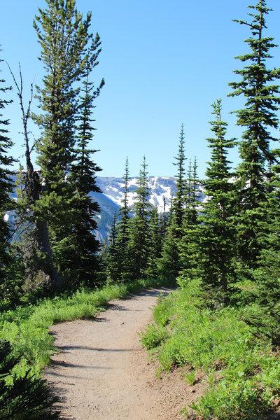 Through the trail near Sunrise