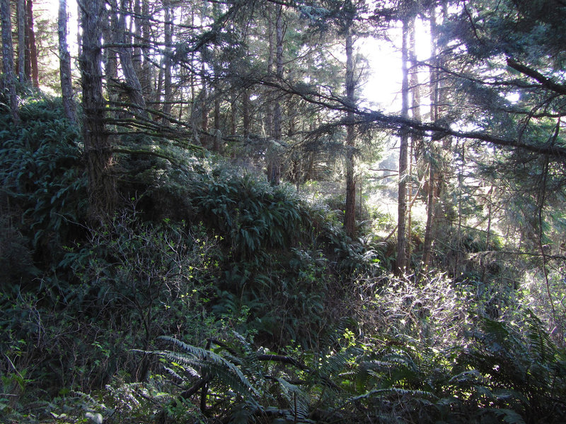 Typical forest along the Lake Ranch trail