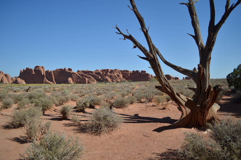 This access trail leads off to the Broken Arch Loop Trail, from Sand Dune Arch Trail.