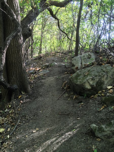 Some rocks offering extra challenging lines for those seeking them on Trail A.