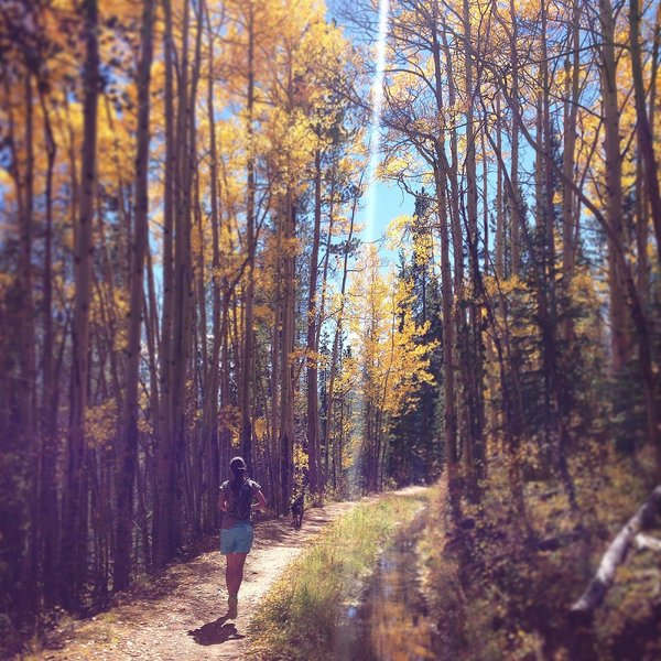 Amazing fall foliage run in September
