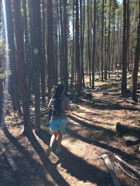 Jaunt through the forest!