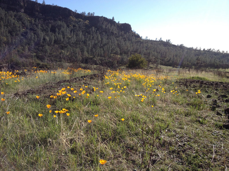 Wild Flowers along the South Rim Trail.