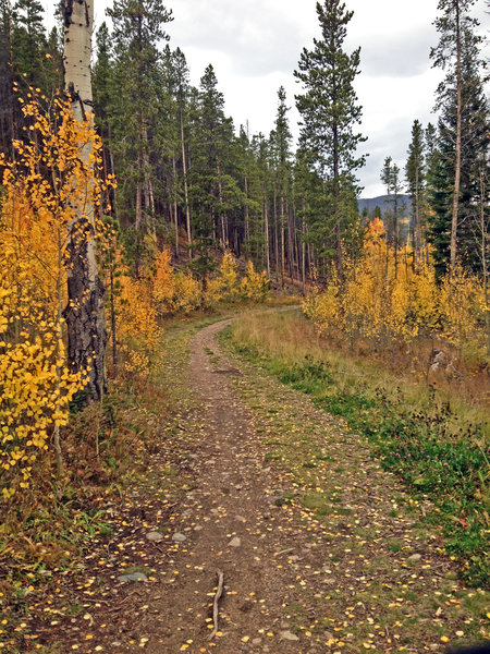 Beautiful aspen leaves lining the Keystone Aqueduct Trail