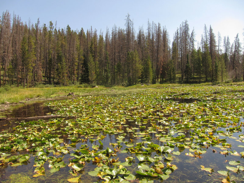 Eagles Nest Wilderness Lily Pad Lake