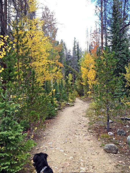 Beautiful fall colors on Rock Creek Trail