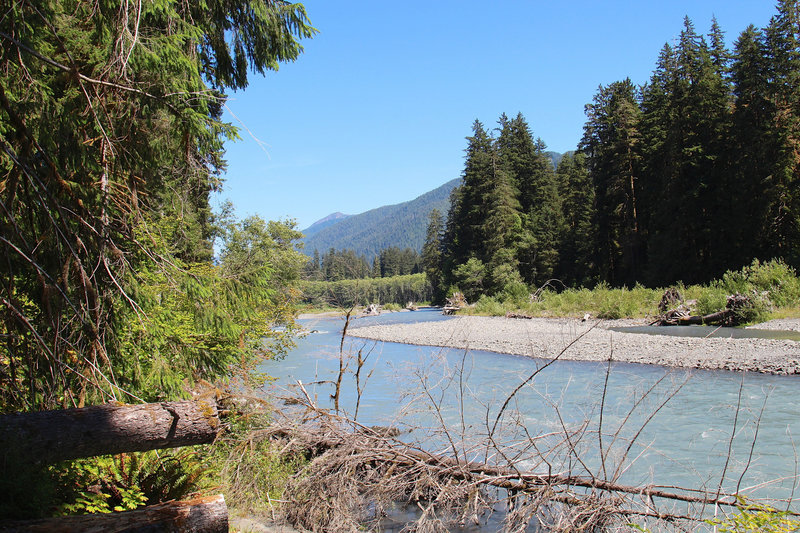 Silty water of the Hoh River