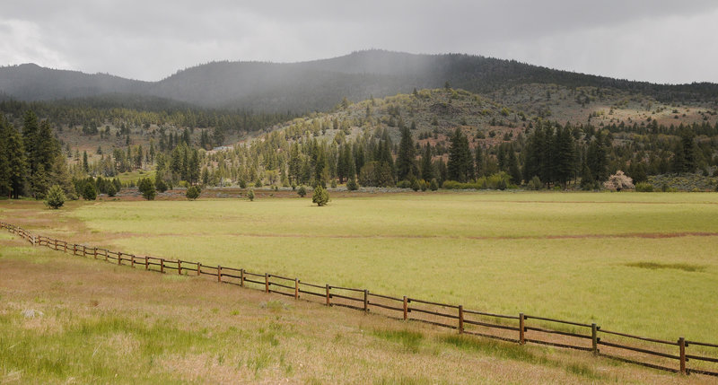 Spring in Susanville Ranch Park- Stonewall Trail