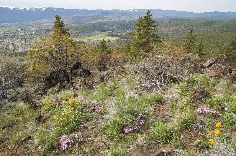 Rocky Top Trail views