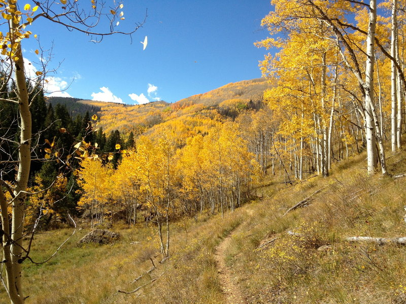 Welcome to fall in Colorado on the Two Elk Trail!