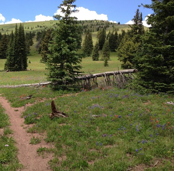This downed tree (as of July 2013) makes it VERY easy to miss this turn for Two Elk Connector