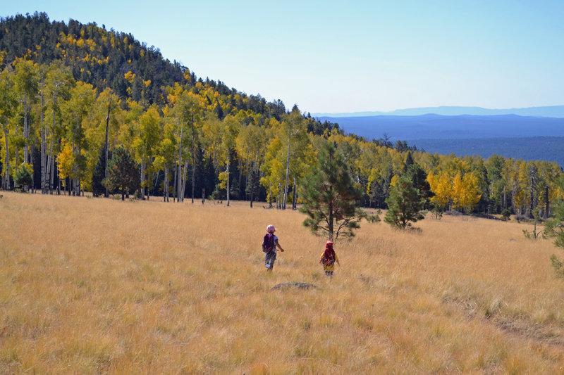 Fall color on the Arizona Trail.