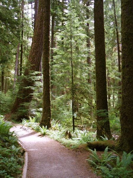 Trail to Sol Duc Falls