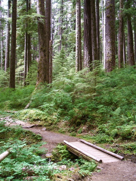 The Trail to Sol Duc Falls