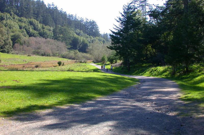 Path through the Divide Meadow