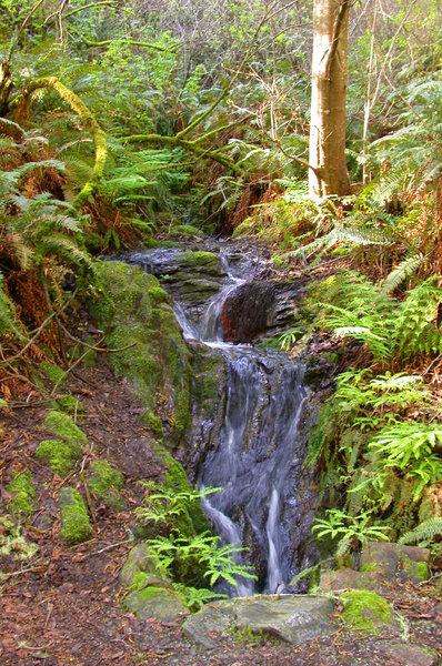 Small falls of Coast Creek