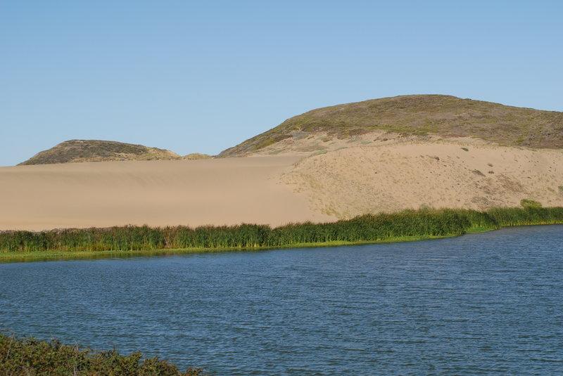 Sand dunes adjacent to Abbotts Lagoon