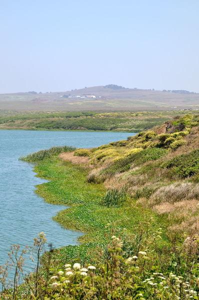 Abbott's Lagoon shoreline