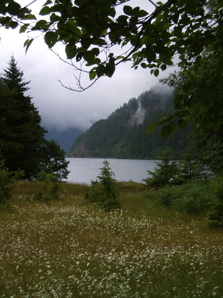 Meadow flowers by Lake Crescent