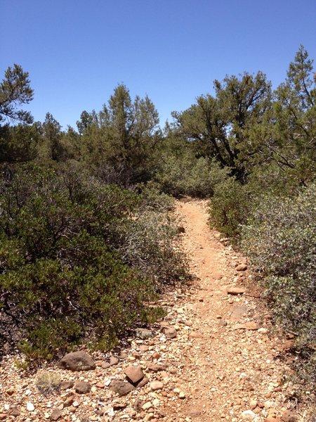 Rocky trail.