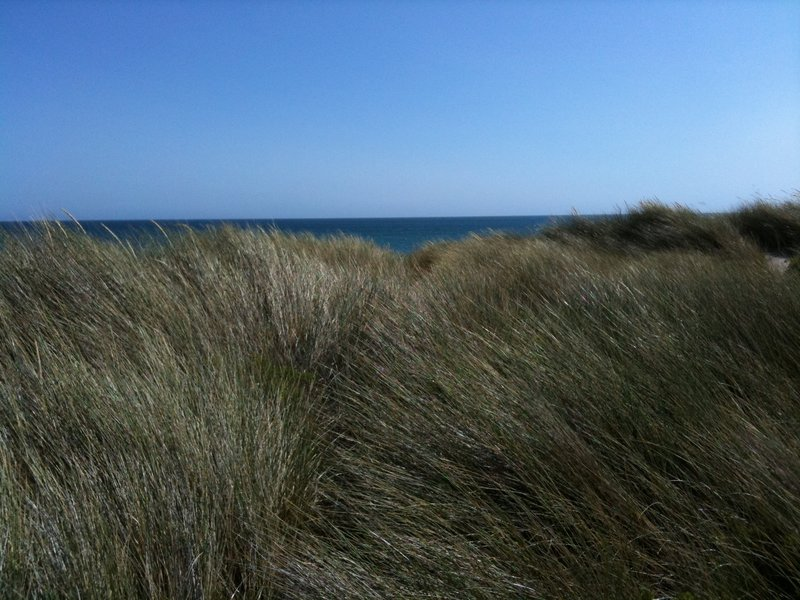 Grass next to Limantour Spit
