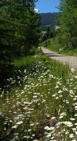 Wildflowers on the Beaver Creek Village Path