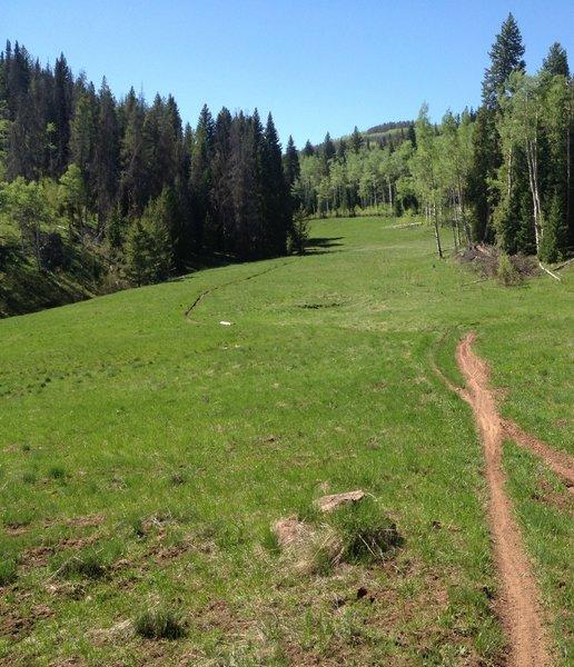Looks like an old ski run... but it's just a beautiful alpine meadow