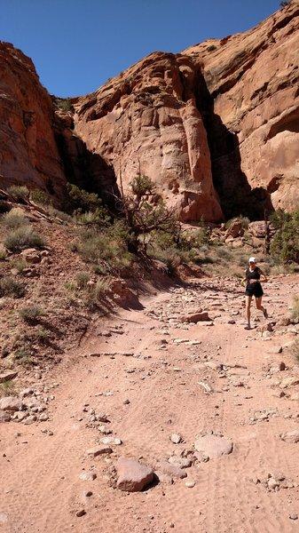 Rock fins abound this trail run.