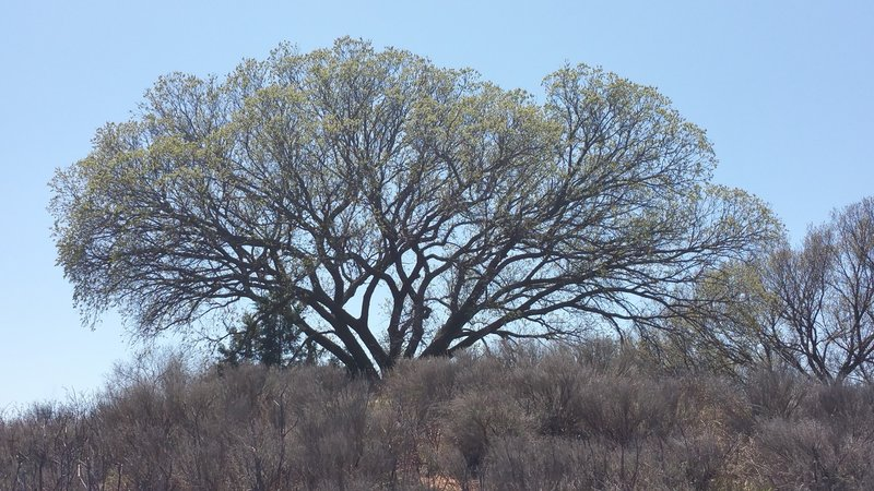 Awesome old trees all around the Owl Cove Recreation Area