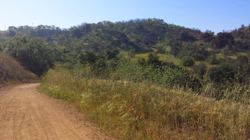 Bonelli Trail, plenty of exposure on this part of the trail before it heads into some shade. Nice and wide though, room for runners and bikes. The Rolling hills are a good workout.