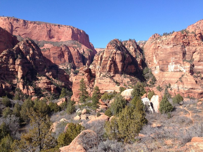 Looking across the valley and up the side canyon that leads to Kolob Arch.
