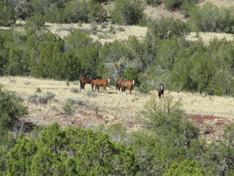 Wild horses on the trail!