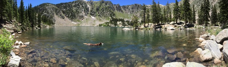 Santa Fe Baldy towering over Lake Kathrine...and a husky enjoying a swim.