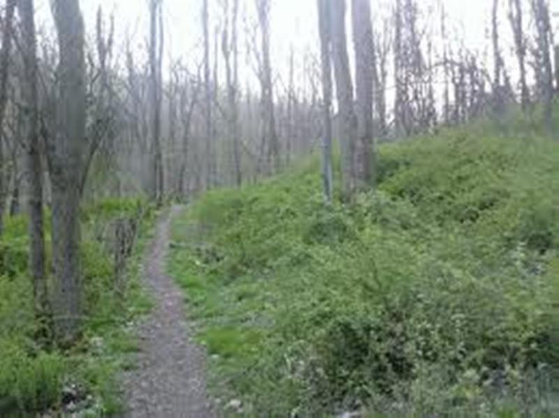 Rachel Carson Trail in Spring