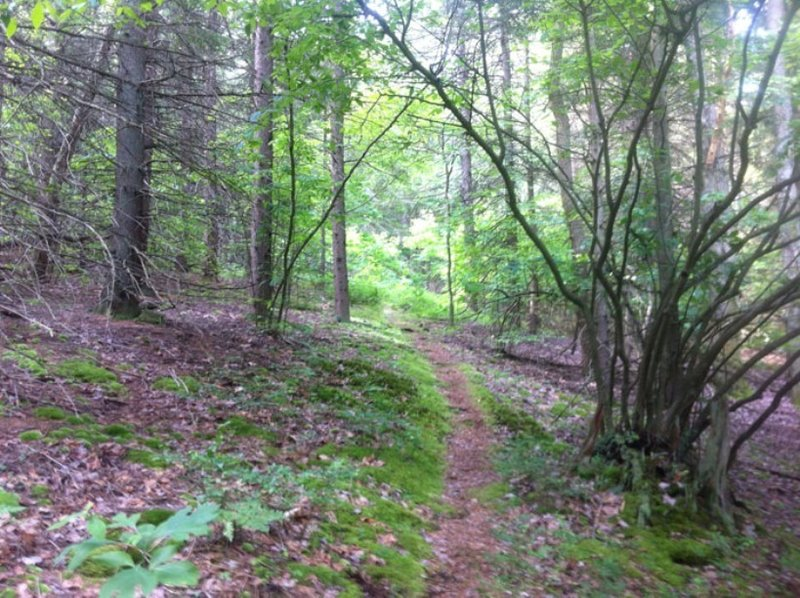 Start of North Country Trail heading south in Allegheny National Forest.