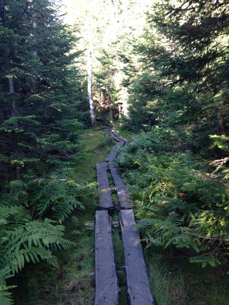 A long wooden bridge crossing what appears to be a boggy section of Sommets Trail.