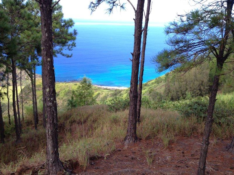 View from Kuaokala Trail.