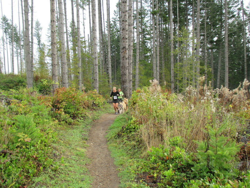 Trail runners and their dogs competing in the Dog Daze 10K on the OAT.