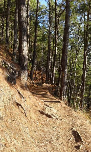 Trails and trees