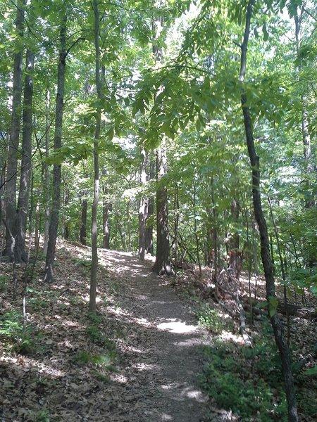 Coosa Backcountry Trail through GA hardwood forest