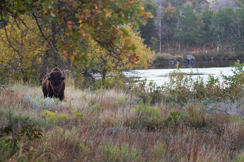 Early morning at Burford Lake